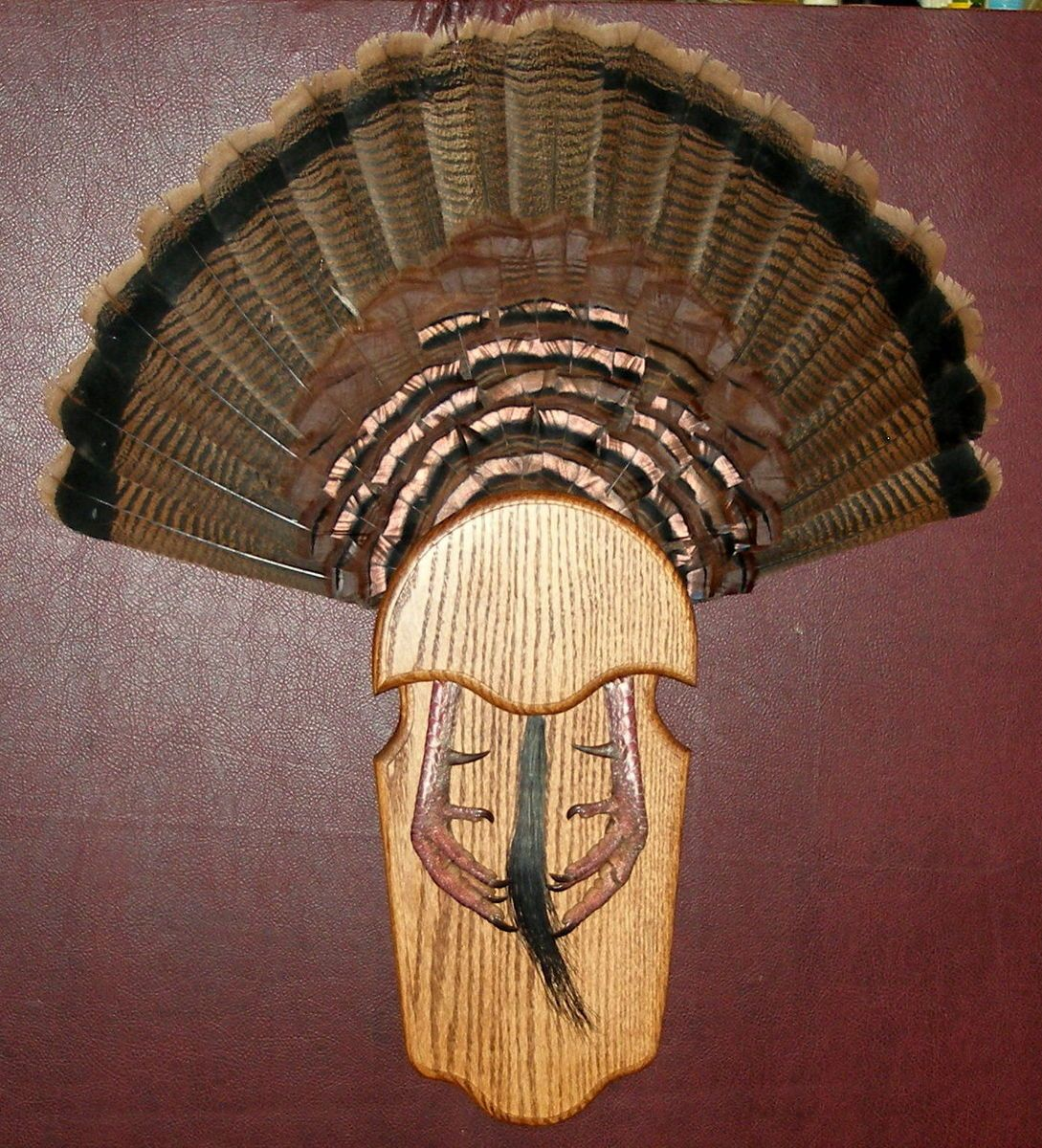 Turkey taxidermy mounts cake ideas and designs for Turkey fan mount template