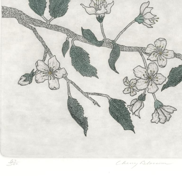 Cherry Blossom Tree Flower Botanical Pencil Signed Leo Donanhue