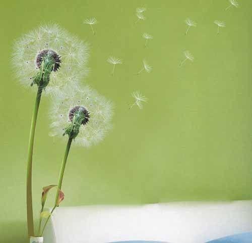 Light Green Dandelion Flowers Wall Stickers art Decals Wallpaper